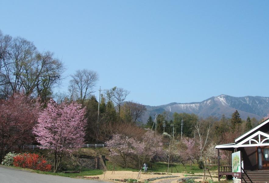 09-4-18桜.JPG