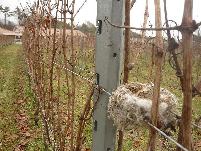鳥の巣2.jpg